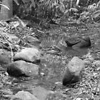 shallow creek by harveyincairns