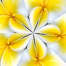 Frangipani Kaleidoscope by Julie Thomas