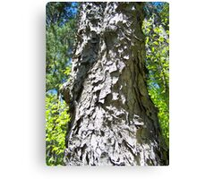 Shaggy Tree Canvas Print