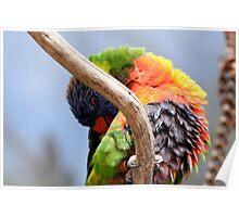Colorful Birdie Poster