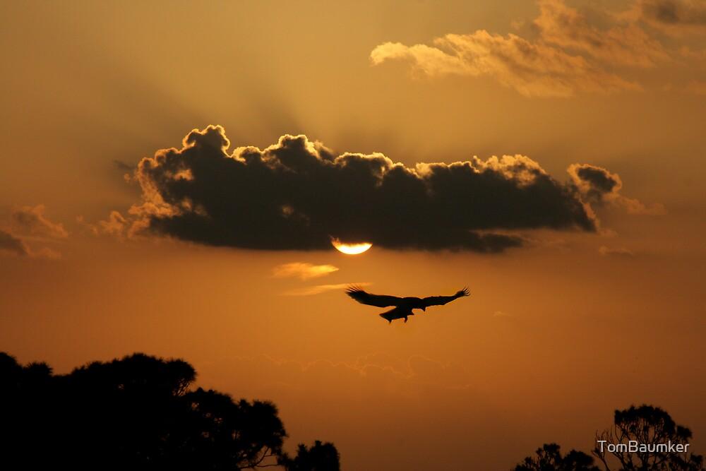 BALD EAGLE & SUNSET by TomBaumker