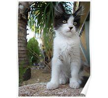 Cute Kitten On A Rock  Poster