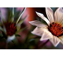 just flowers Photographic Print