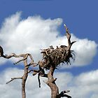 BALD EAGLE FAMILY by TomBaumker