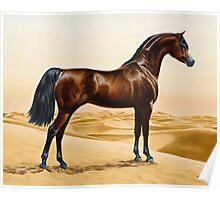 Arabian Horse - William Barraud Poster