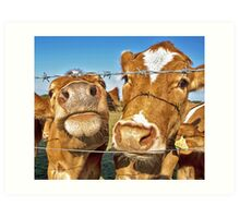 Poddy Calves Art Print