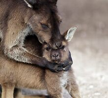 I LOve My Little Boy! by Barrie Collins