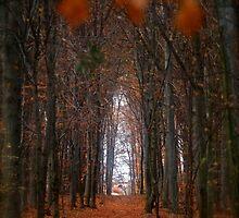 How to open door to paradise . Psalm 127:2 . #autumn . Andrzej Goszcz by © Andrzej Goszcz,M.D. Ph.D
