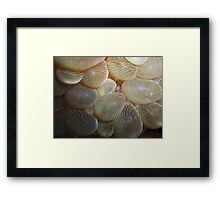 Dude the walls are closing in on me! Framed Print