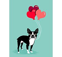 Boston Terrier Valentines Love Balloons gifts for dog lovers pet owners dog breeds customizable Photographic Print