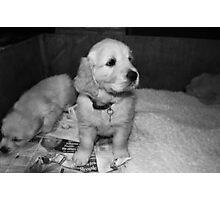 puppies... Photographic Print