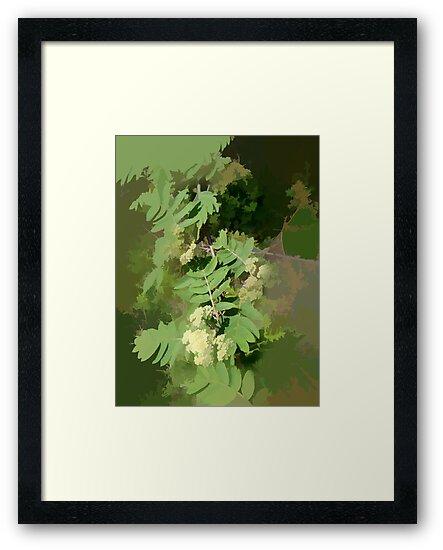 Abstract of Rowan Blossom (Mountain Ash) by hilarydougill