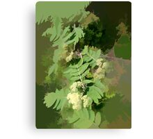 Abstract of Rowan Blossom (Mountain Ash) Canvas Print