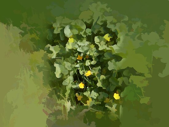 abstract of Marsh marigolds by hilarydougill