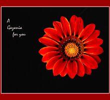 A Gazania for you by Warren. A. Williams
