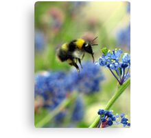 Zooming In Canvas Print