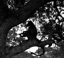 Silhouette Baboon by Natalie Broome
