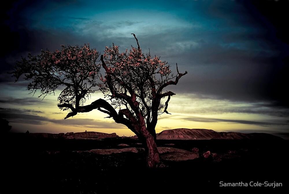 Blossom Tree @ Dog's Rocks, Geelong by Samantha Cole-Surjan