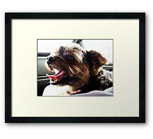 Shotgun Terrier Framed Print