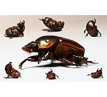 Breakdancing Beetle Photographic Print