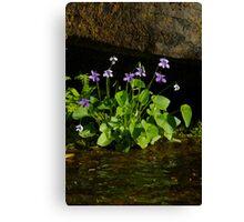 Wild Purple Violets Canvas Print