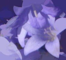 abstract of Campanula by hilarydougill