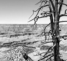 Grand Canyon Overlook BW by nativeminnow