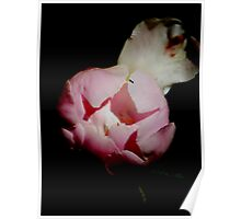 Peony Unbloomed Poster