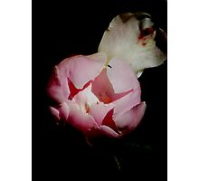 Peony Unbloomed Photographic Print