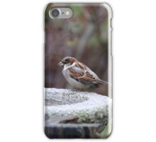 Water Fountain Finch iPhone Case/Skin