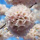 Spring by Daniel Kazor