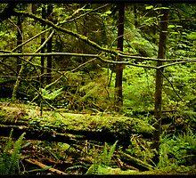 Environmentally Correct by Pratik Agrawal