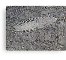 Centipedic Fossil Canvas Print