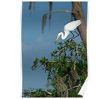 Egret eating dragonfly Poster
