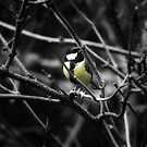 Great tit by Scorpion9