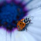 Ladybug 2 by DavidBerry