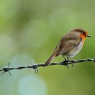 Bird on a wire by Scorpion9