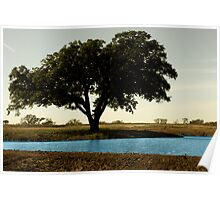 Tree by Pond Poster