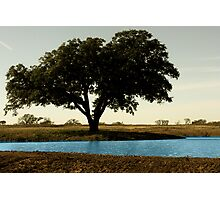 Tree by Pond Photographic Print