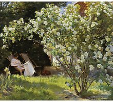 P.S. Krøyer - Roses. Marie Krøyer seated in the deckchair in the garden by Mrs Bendsen's_house Photographic Print
