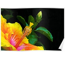 Yellow Hibiscus I Poster