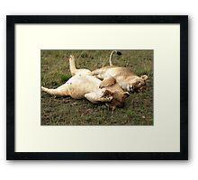 Stuffed Framed Print