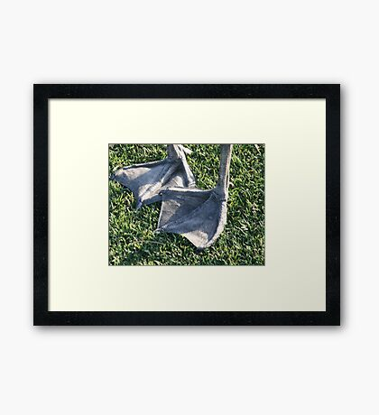 Web Feet Framed Print