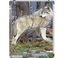 Timber Wolf on the Alert iPad Case/Skin