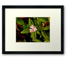 Wilderflower Framed Print