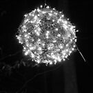 Tanglewood Lights- 1 by Kelsey Williams