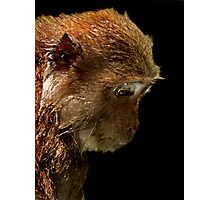 Long Tail Macaque III  Photographic Print