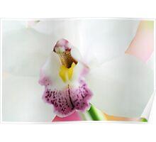 "Cymbidium Orchid Pearl-Balkis ""Fiona"" Poster"