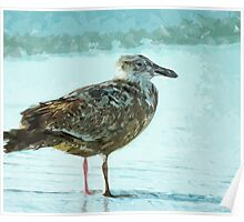 Herring Gull on the Beach Abstract Impressionism Poster