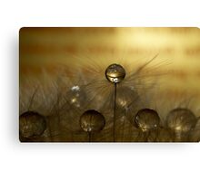 Chocolate Drops Canvas Print